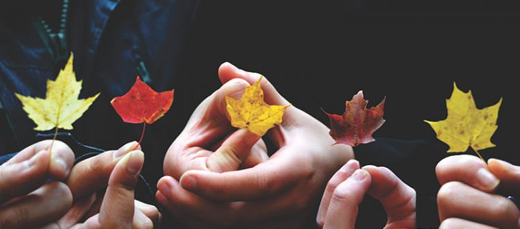 Image shows hands holding Autumn leaves on a black background.